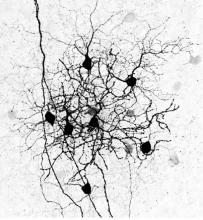 Retinal Circuits